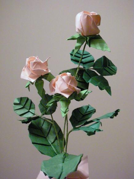 川崎玫瑰花 rose